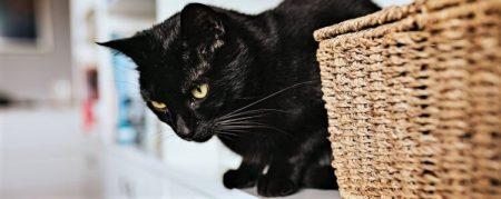 Imagen gato cesta de mimbre rattan decoracion de interiores mimbre